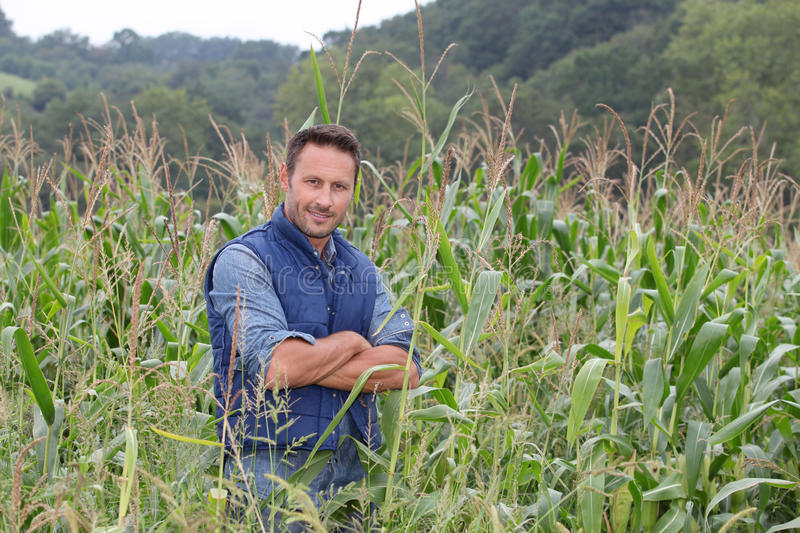 Portrait of agronomist. Agronomist analysing cereals in corn field royalty free stock photos