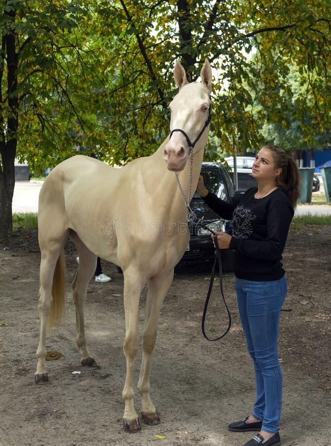 Portrait of a akhal-teke horse ahd trainer stock photo
