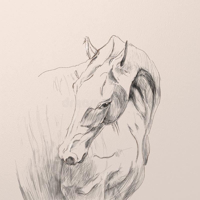 Portrait of akhal-teke horse royalty free illustration