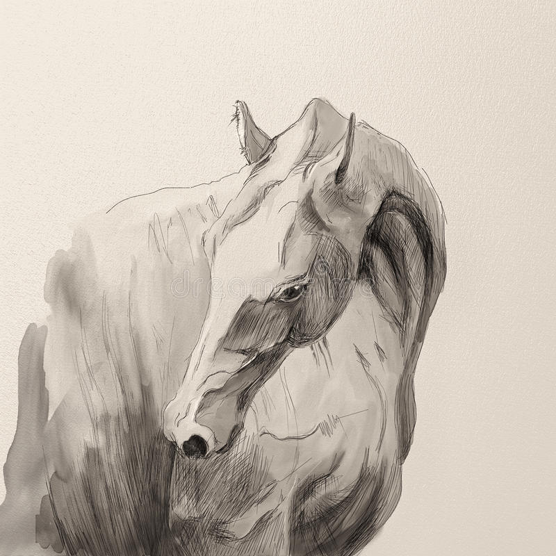 Portrait of akhal-teke horse stock image