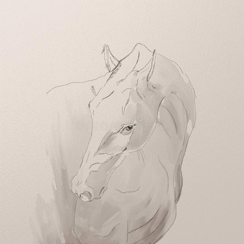 Portrait of akhal-teke horse royalty free stock image
