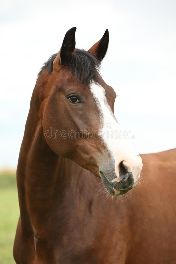 Amazing brown horse royalty free stock photography