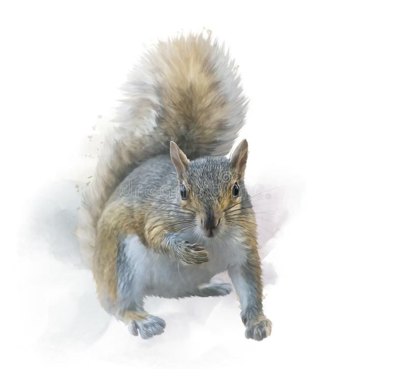American gray squirrel on white background. watercolor painting stock illustration