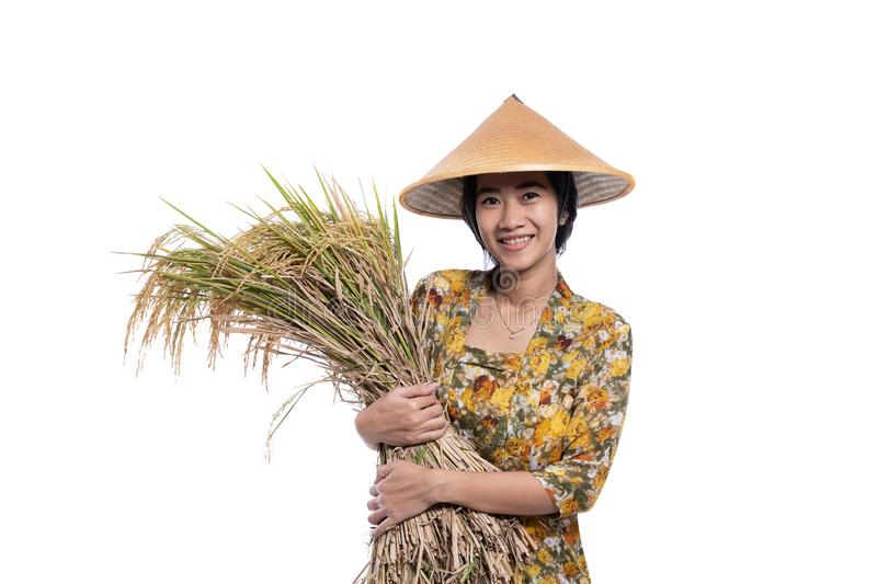 Asian beautiful farmer holding rice grain isolated over white stock image