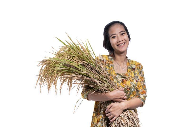 Asian beautiful farmer holding rice grain isolated over white stock photos