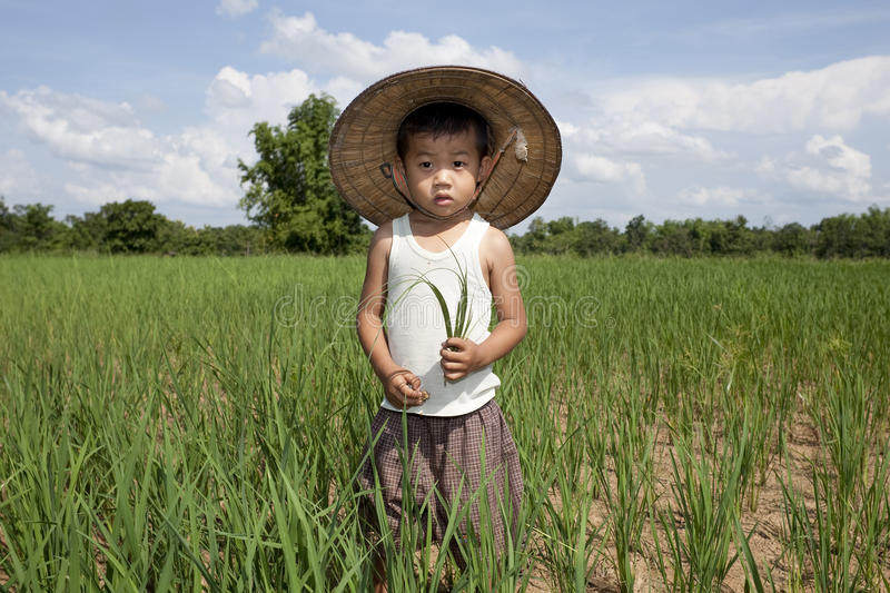 Portrait Asian child in the paddy field royalty free stock images