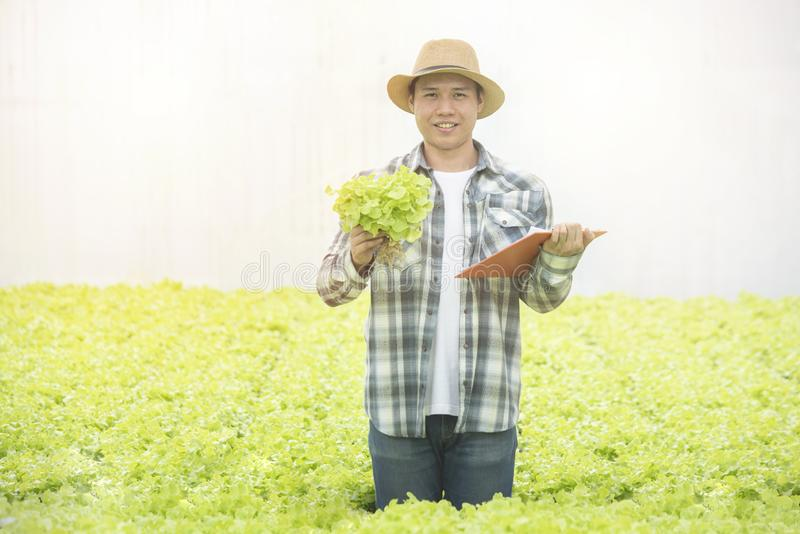 Portrait of asian man farmer hand hold green lettuce with document file standing in greenhouse organic farm with happy,Small royalty free stock photos