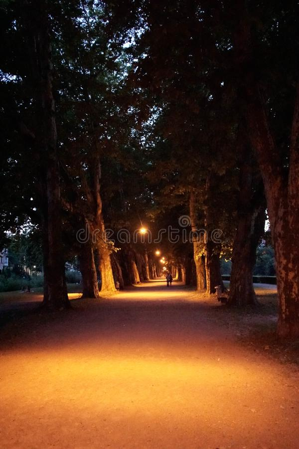 A portrait of the atmosphere from Platanenallee at night. There is no crowd in the park with these big trees. Light orange lights royalty free stock image