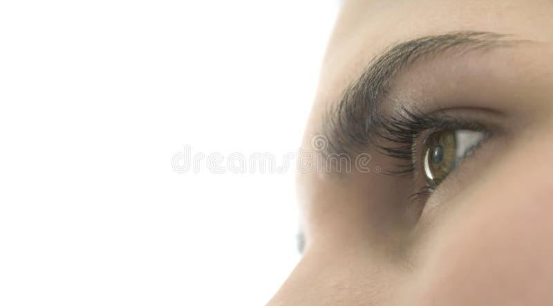 Portrait-Auge lizenzfreie stockfotografie