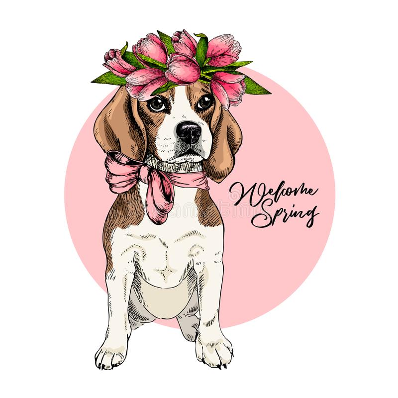 Portrait of beagle dog wearing tulip crown. Welcome spring. Hand drawn colored vector illustration. Engraved detailed royalty free stock photos