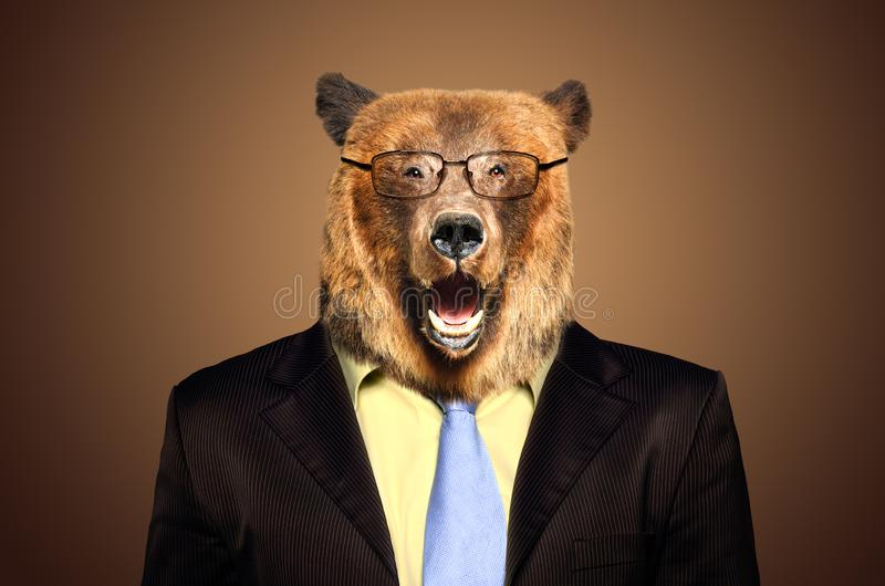 Portrait of a bear in a business suit stock photography
