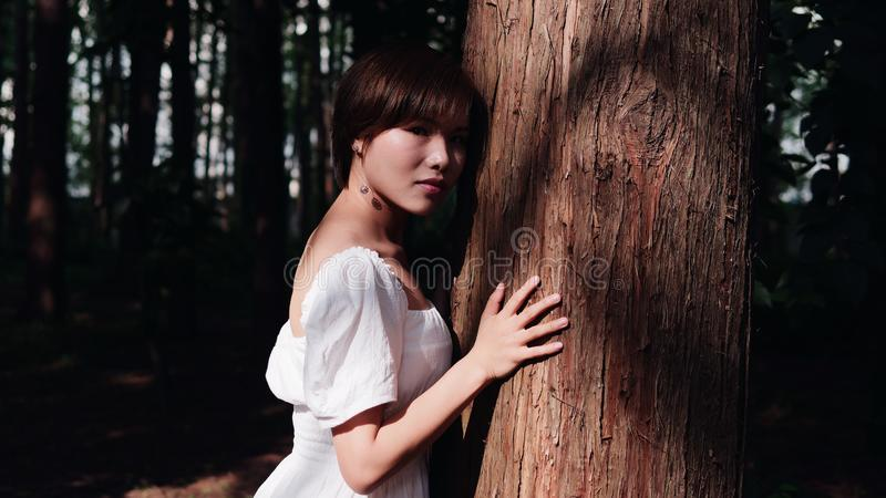 Portrait of beautiful Asian woman hug a big tree and looking at camera in shadows summer forest. Outdoor fashion portrait of glamo royalty free stock images