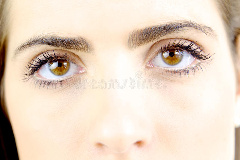 Portrait of beautiful brown eyes of gorgeous woman. Gorgeous lady looking camera intense stock photo