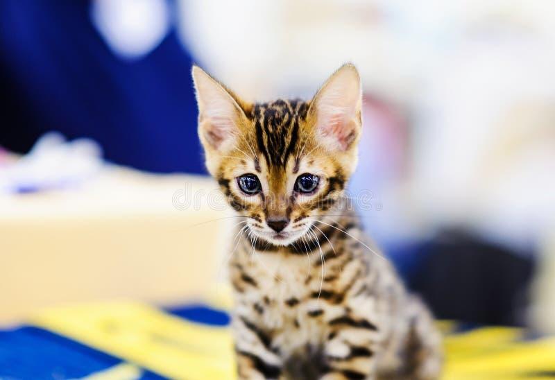 Portrait of beautiful cat stock photo