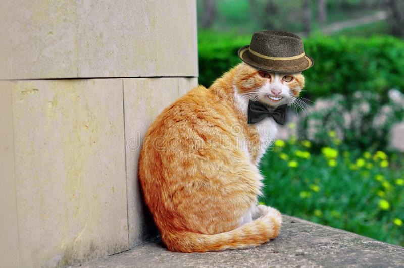 Portrait of a beautiful funny cat in a hat and with a butterfly that smiles strangely stock image
