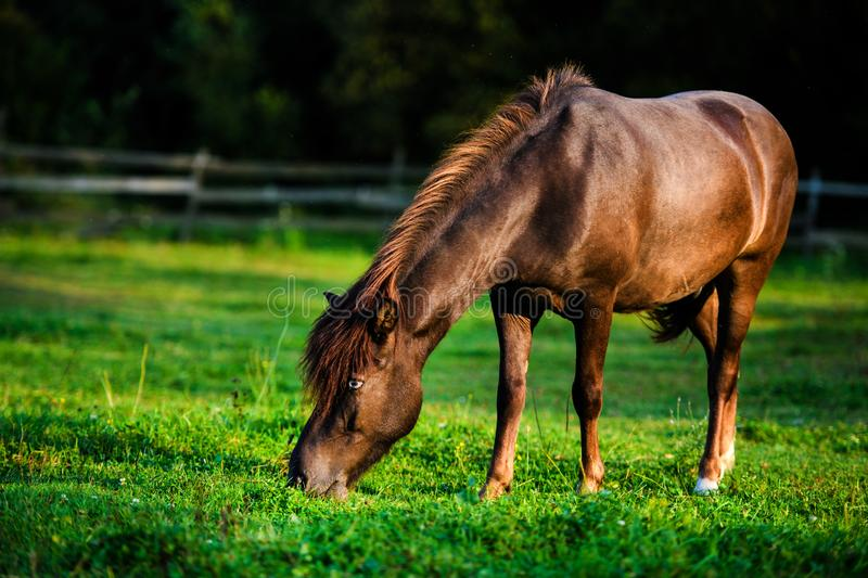 Portrait of beautiful horse in summer stock photography