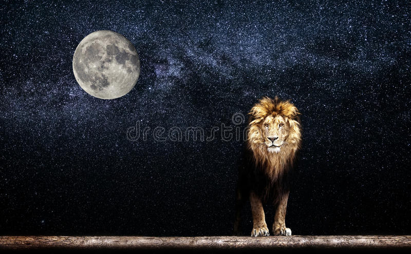 Portrait of a Beautiful lion, lion in the starry night stock photography