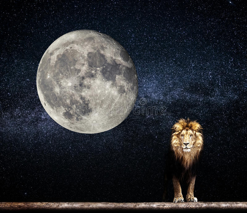 Portrait of a Beautiful lion, lion in the starry night moon. Portrait of a Beautiful lion, lion in the dark. starry night and moon royalty free stock images