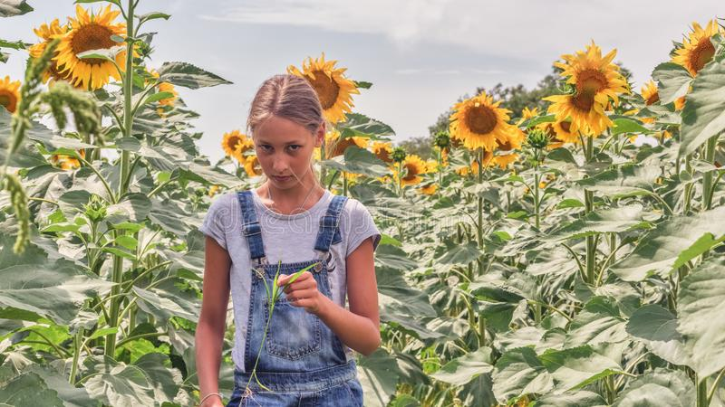 Portrait of a beautiful teenage girl in a sunflower field stock image