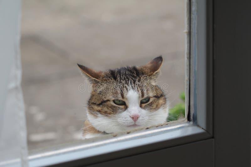 Portrait of a beautiful purebred housecat. Pets / Portrait of a beautiful purebred housecat stock photo