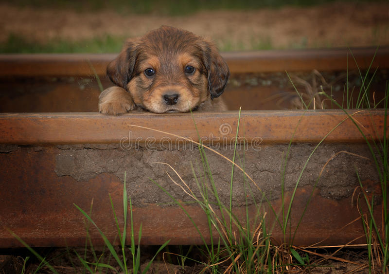 Portrait of Beautiful Small Cute Sad Puppy. Cute sad Little puppy. Dogs with sad look stock images