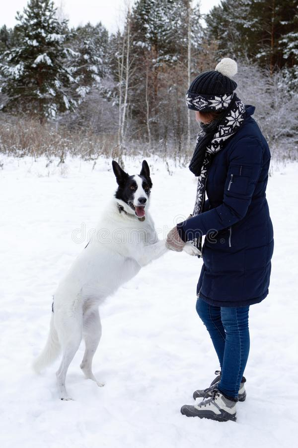 Portrait of beautiful young woman with her black and white dog on a background of winter snowy forest stock photo