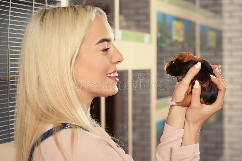 Portrait of beautiful young woman holding guinea pig royalty free stock photo