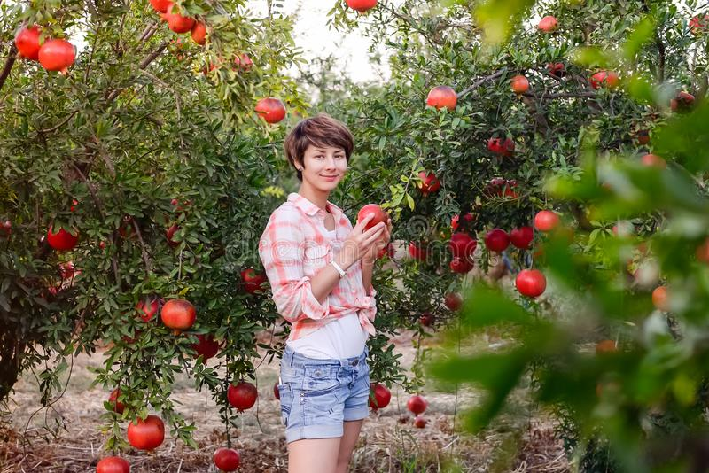 Portrait of Beautiful young woman in red checkered shirt looking at camera and picking ripe organic pomegrate fruits in the garden royalty free stock photo