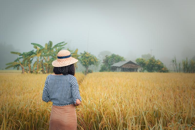 Portrait of beautiful young woman in rice fields at sunrise., Pretty asian woman is holding ear of rice in rice farm., Natural stock photography
