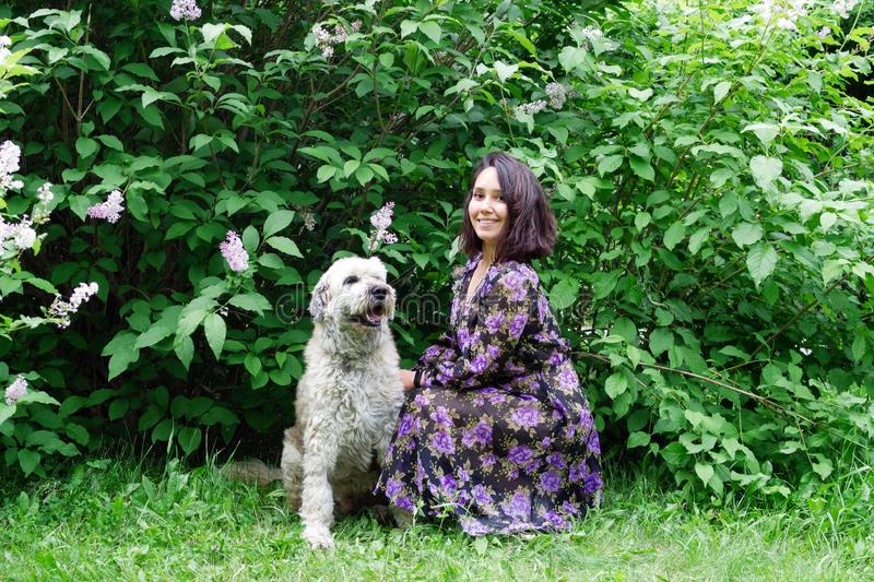 Portrait of beautiful young woman with South Russian Shepherd Dog on a background of summer park with blooming lilac bushes royalty free stock photography