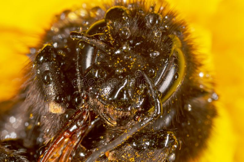 Portrait of a bee on nature stock images