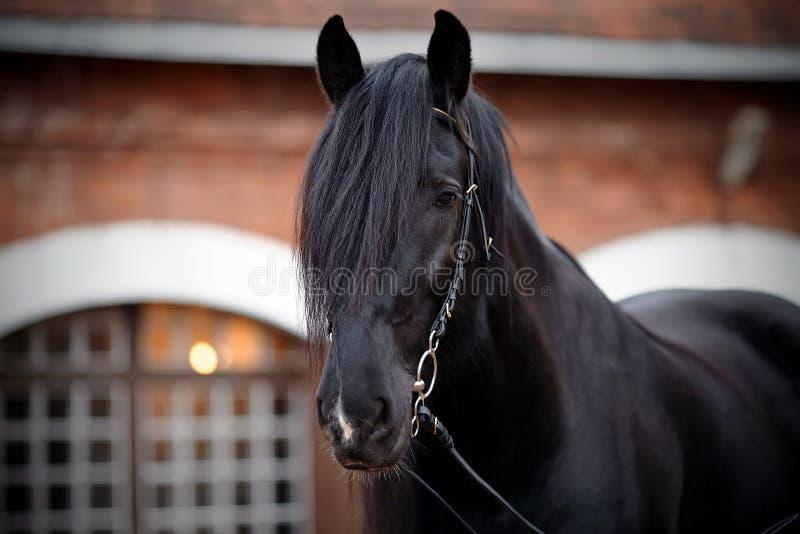 Portrait Of A Black Horse. Stock Photo
