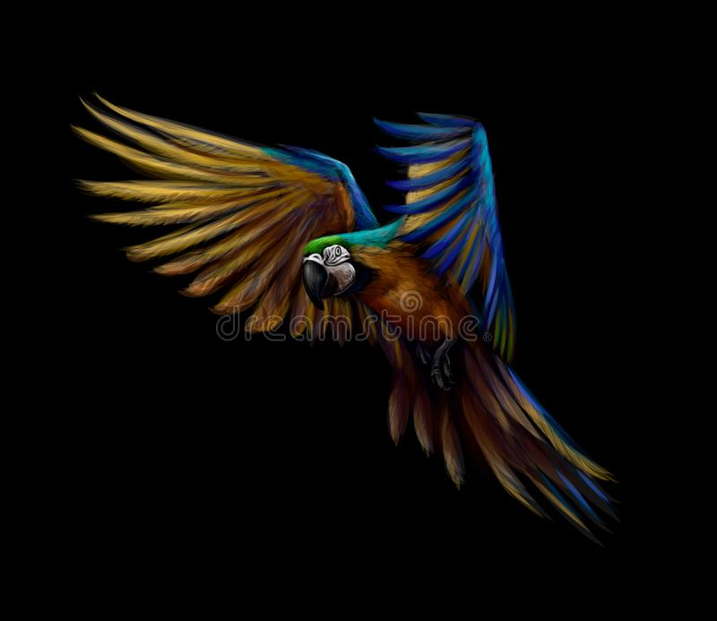 Portrait blue-and-yellow macaw in flight on a black background. Ara parrot, Tropical parrot vector illustration