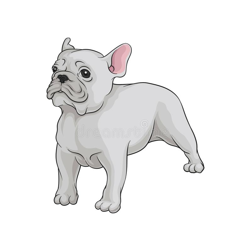 Portrait of boston terrier dog in pose. Cute puppy with white short coat. Home pet. Domestic animal. Cartoon vector icon. Portrait of boston terrier dog in pose royalty free illustration