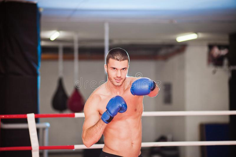 Portrait of boxer royalty free stock photography