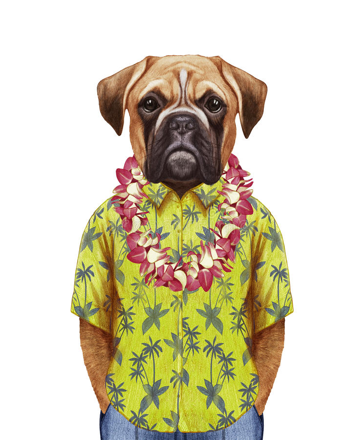 Portrait of Boxer Dog in a summer shirt with Hawaiian Lei. stock illustration