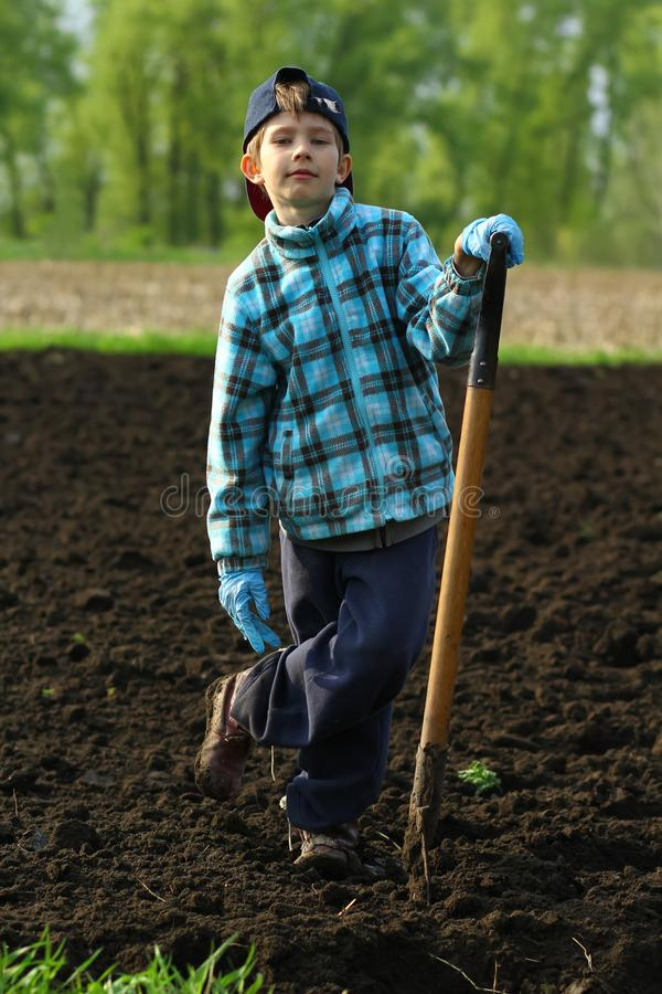 Portrait of a boy posing with a spade on the vegetable garden. Portrait of a boy working and posing with a spade on the vegetable garden stock photo