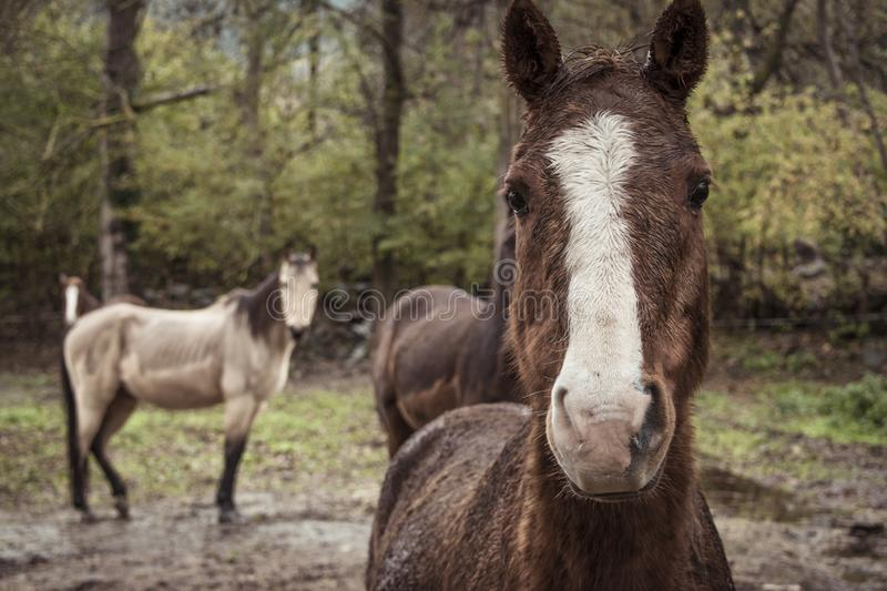 Portrait of a brown horse stock photography