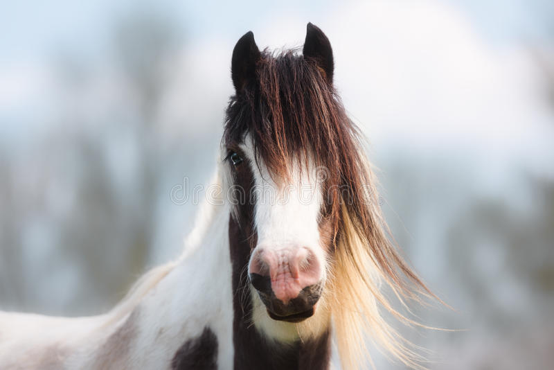 Portrait of Brown, White and Blonde Horse stock photos