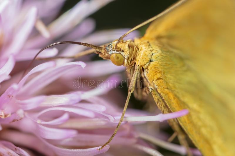 Portrait of a butterfly on a flower stock photography