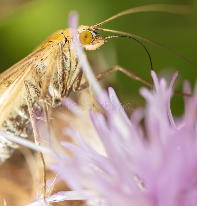 Portrait of a butterfly on a flower royalty free stock image