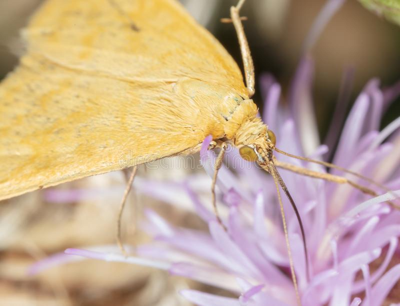 Portrait of a butterfly on a flower stock photos