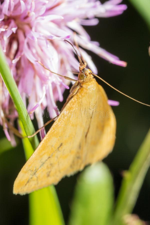 Portrait of a butterfly on a flower royalty free stock photography