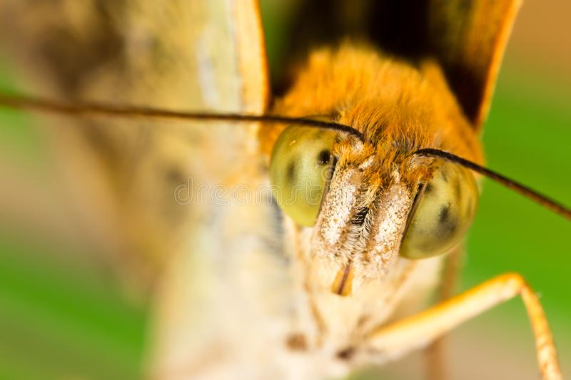 Portrait of a butterfly in nature stock photo