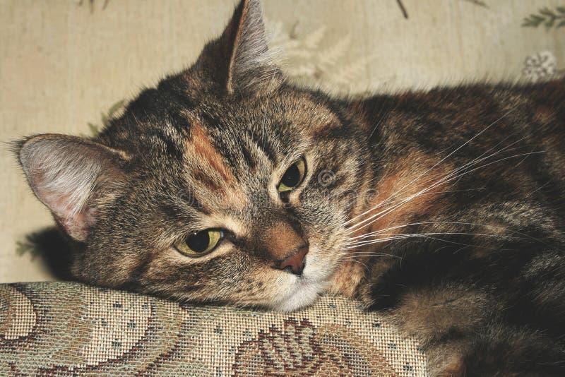 Portrait of calico cat stock image