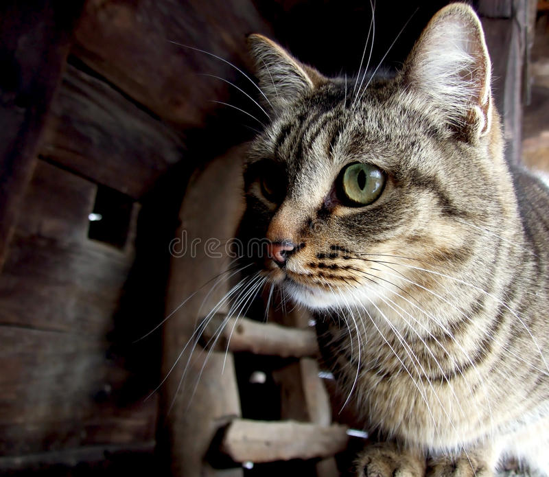 Download Portrait of a cat stock image. Image of gray, looking - 18430619