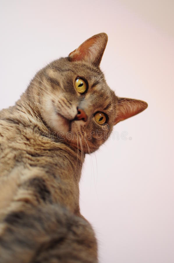 Download Portrait of a cat stock photo. Image of isolated, friendship - 21102120