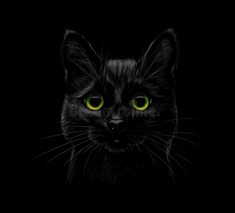 Portrait of a cat on a black background royalty free illustration