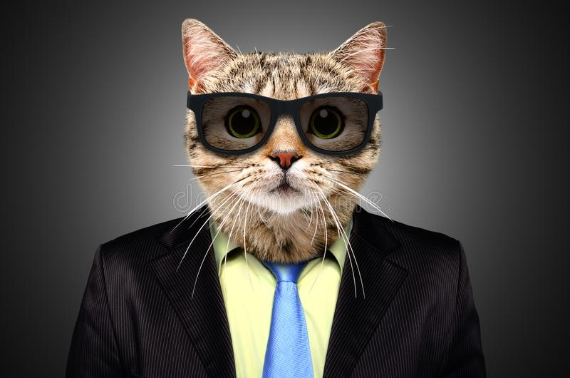 Portrait of a cat in a business suit stock photography