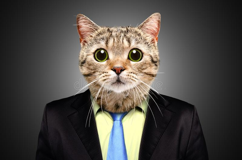 Portrait of a cat in a business suit royalty free stock images